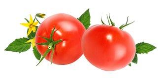 Tomate isolado no branco Imagem de Stock Royalty Free