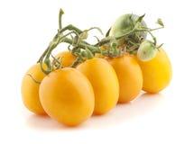 Tomate jaune photos stock