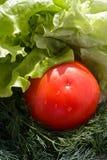 Tomate-, Kopfsalat- und Dillhintergrund Stockbilder