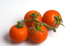 tomate mûre sur un fond blanc Image stock