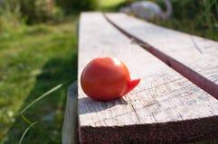 Tomate maduro Foto de Stock