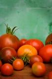 Tomate maduro da colheita Fotos de Stock Royalty Free