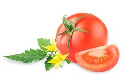 Tomate maduro em um fundo branco tomat em um branco foto de stock
