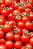 Tomate mit Rebe lizenzfreie stockfotografie