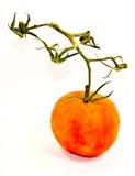 Tomate mit Stiel Lizenzfreie Stockbilder