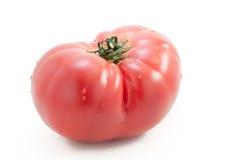Tomate mit Tau Stockfoto