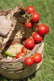 Tomate na cesta Imagens de Stock Royalty Free