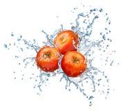Tomate no pulverizador da água. fotografia de stock royalty free