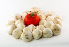 Tomate nos cogumelos Fotografia de Stock Royalty Free