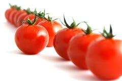 Tomate obstinée Photos stock