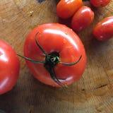 Tomate orgânico cultivado em casa Fotografia de Stock Royalty Free