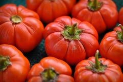 Tomate organique Photo libre de droits