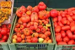 Tomate organique Photos stock