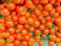 Tomate platation Bauernhof in Sommer Niseko Hokkaido Japan Stockfoto