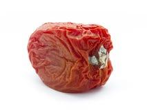 Tomate podre Fotografia de Stock Royalty Free