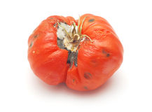 Tomate putréfiée Photographie stock libre de droits