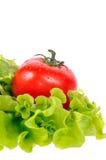 Tomate rojo con la ensalada verde Imagen de archivo libre de regalías