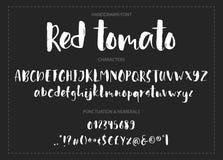 Tomate rojo Fuente Handdrawn del cepillo de la tinta Foto de archivo
