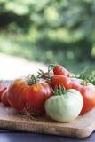 Tomate rot und grün lizenzfreie stockfotos