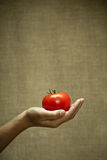 Tomate rouge Images stock
