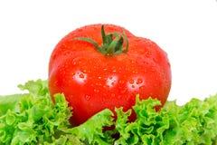 Tomate rouge Image libre de droits