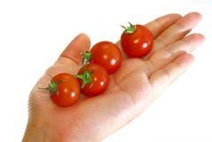 tomate rouge photographie stock libre de droits