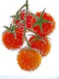 Tomate rouge dans l'eau image libre de droits