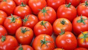 Tomate rouge fraîche dans les gouttes de l'eau comme contexte Image stock