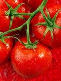 Tomate rouge sur le rouge Photos libres de droits
