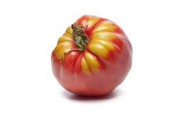 Tomate Single Coeur de Boeuf Foto de archivo