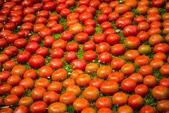 Tomate sjö Royaltyfri Foto