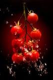 Tomate sur le fond rouge de gradient Photographie stock