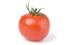 Tomate sur un fond blanc. Image libre de droits