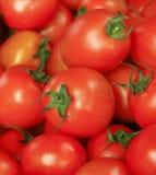 Tomate, Tailândia Foto de Stock Royalty Free