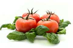 Tomate und Basilikum Stockfotografie