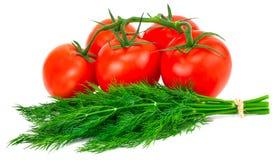 Tomate und Dill lokalisiert auf weißem Hintergrund lizenzfreie stockbilder