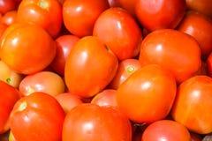 Tomate vermelho Imagem de Stock