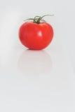 Tomate vermelho brilhante no branco Fotografia de Stock Royalty Free
