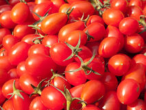 Tomate vermelho orgânico foto de stock