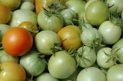Tomate verte fraîche Photo libre de droits