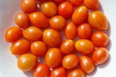 Tomate vom Garten Lizenzfreie Stockfotos