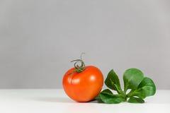 Tomate y ensalada frescos Imagen de archivo