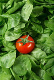 Tomate y lechuga encrespada Imagen de archivo