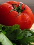 Tomate y perejil Foto de archivo libre de regalías
