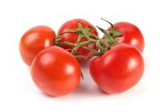 Tomateblock Lizenzfreie Stockbilder