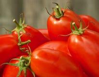 Tomateernte Lizenzfreies Stockbild