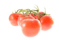Tomatefamilie Lizenzfreie Stockbilder