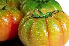 Tomatehintergrund Stockbilder