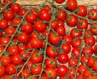 Tomatehintergrund Lizenzfreies Stockbild