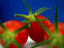 Tomaten. Stock Foto's